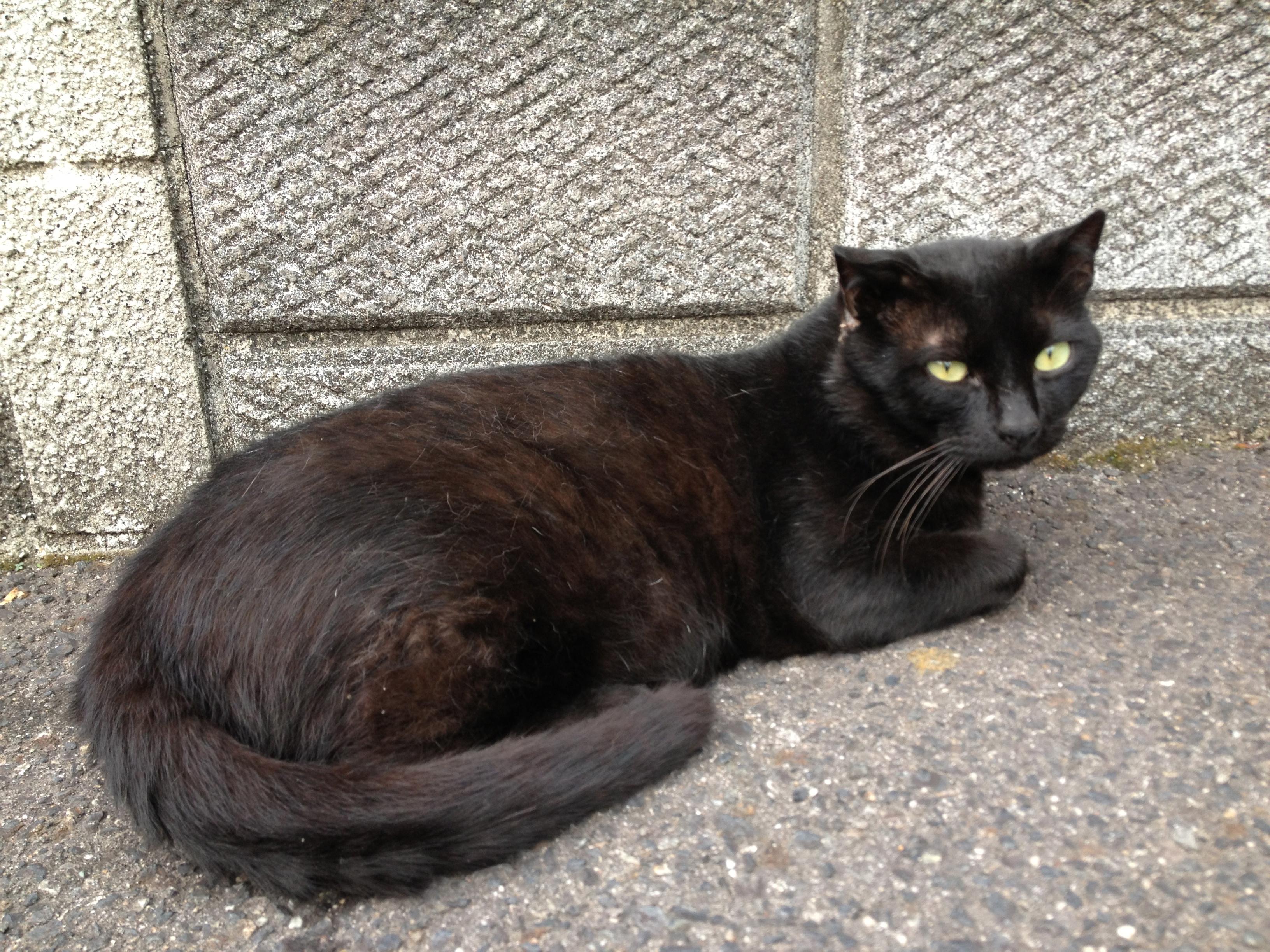 家の前で黒猫に遭遇!黒猫の迷信について調べてみた!