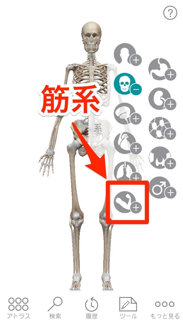 Human anatomy atlas 02