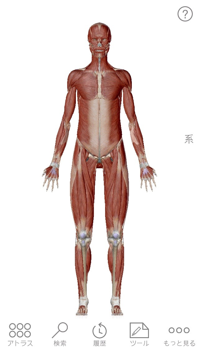 Human anatomy atlas 03
