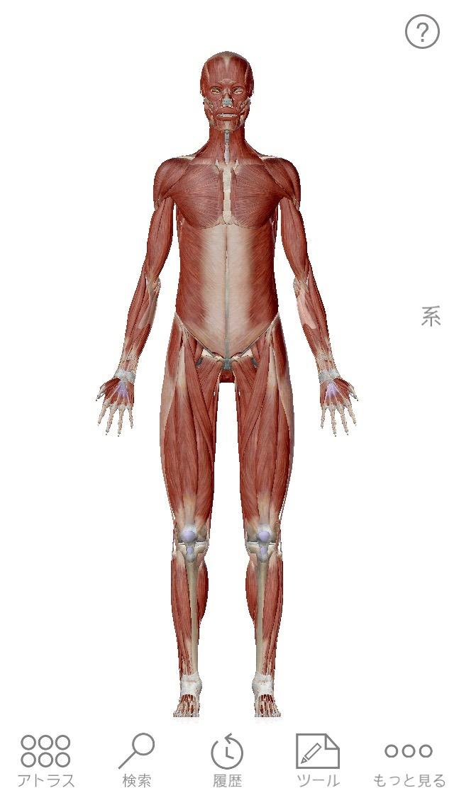 Human anatomy atlas 03